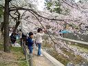 桜の木の下に遊ぶ姉弟