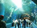 サメとエイの海中トンネル