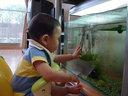 魚に興味を示すリンボウ
