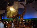 全長5mのこのカマラサウルスは亜成体