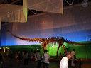 22mのマメンチサウルスも充分に巨大だ
