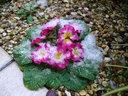 ヴェランダに咲く花