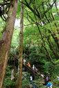 あの階段を登れば、縄文杉