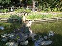 池のカメに餌をやる