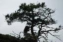 ロープウェイから見えたニホンザル 木に登って揺すっていた