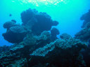 見事なサンゴ礁