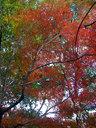 山王公園の紅葉を見上げる