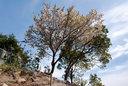 山桜とクスノキ
