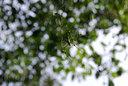 ジョロウグモがたくさん