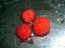 家の裏で採れた野イチゴ