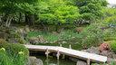 池には菖蒲