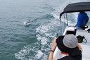 イルカと並走