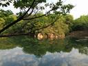 今朝の北山池