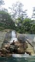 岩の上から飛び込むトド