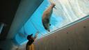 チューブで飼育員の指示に従うゴマフアザラシ