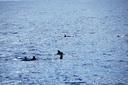 イルカの群れ発見