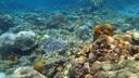どこまでも透明な水の下は豊かなサンゴ礁