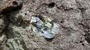 古銅輝石の結晶