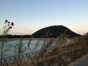 コスモスと北山ダムと甲山