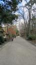 糺の森を貫くこの参道を何度歩いたことか
