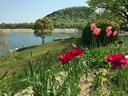 花越しの北山ダムと甲山