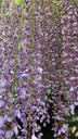 花の密度がすごい