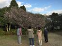 十月桜を仰ぎ見る