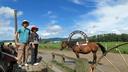 馬に乗ります