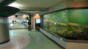 チュウルイ島に上陸し、マリモ展示センターを見学する