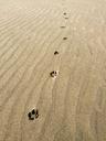 砂丘の風紋の上にキツネのものらしき足跡が