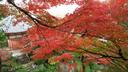 紅葉は美しかったが...2