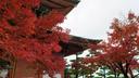 紅葉は美しかったが...3