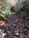 落ち葉で埋まったシングルトラック