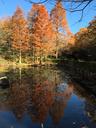 梅林横のハス池