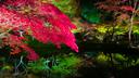 臥龍池に映える紅葉