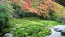 下で眺める庭も非常に美しい