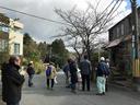 桜の街路樹の観察会