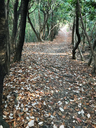 牧野ヶ池緑地の落ち葉フコフコトレイル