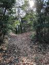 落ち葉のトレイル