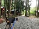 杉木立の中のコテージエリア