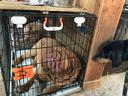 眠る看板犬のアーロをひっそり眺める