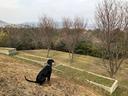 スカイくんと遊んだ思い出の仁川市民緑地で