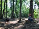 木漏れ日射す森林帯