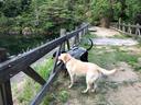 パリスと山散歩