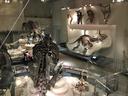 常設の恐竜展示も充実 トリケラトプスの化石は世界屈指のクオリティ
