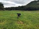 河畔の草原を駆け回る 大自然のスケールがデカい