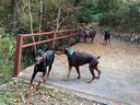 仁川緑地で一走り