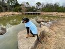 甲山自然観察池にも立ち寄り