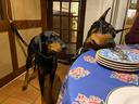 レストランも犬同伴可