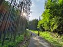 竹林と杉木立に挟まれた隘路を歩く
